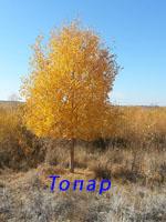 фото Топар, фото Топарской озерной системы